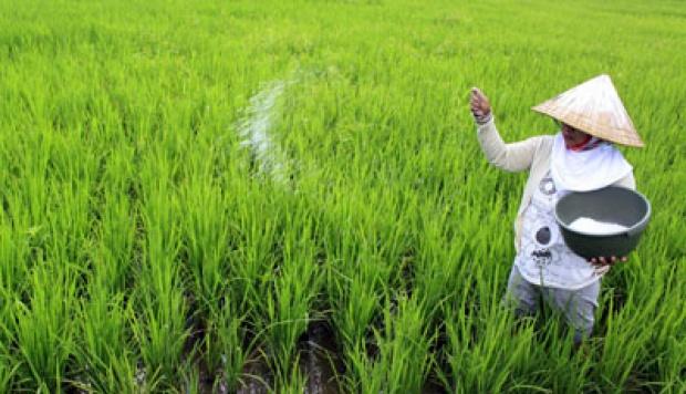 Peluang Usaha Pertanian Di Desa Yang Modern Dan Menjanjikan