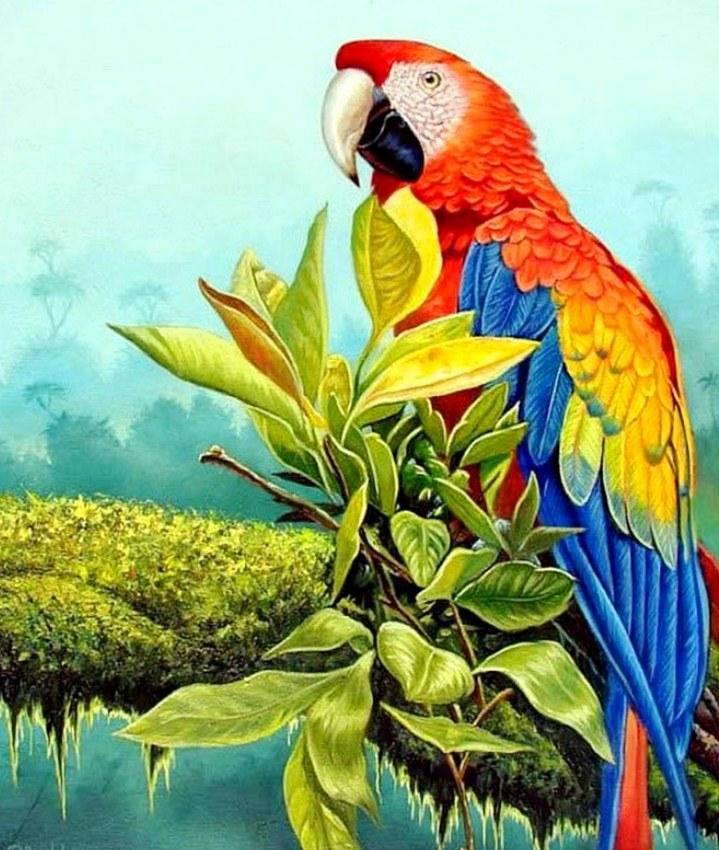 Im genes arte pinturas cuadros de aves ex ticas al oleo - Los cuadros mas bonitos ...