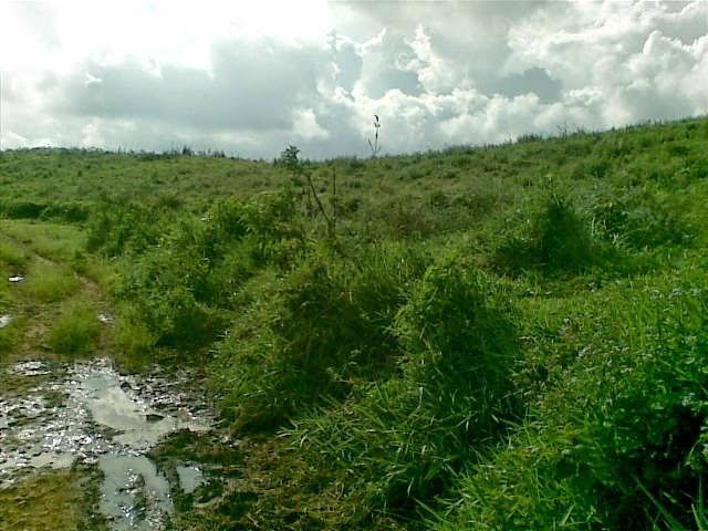 Foto(5386) Di Jual Tanah Murah 96 Ha Lokasi Kawasan Puncak Jual tanah di cipanas jual tanah di puncak