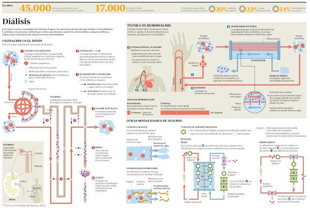 Como funciona el riñon y la hemodialisis ante la insuficiencia renal cronica