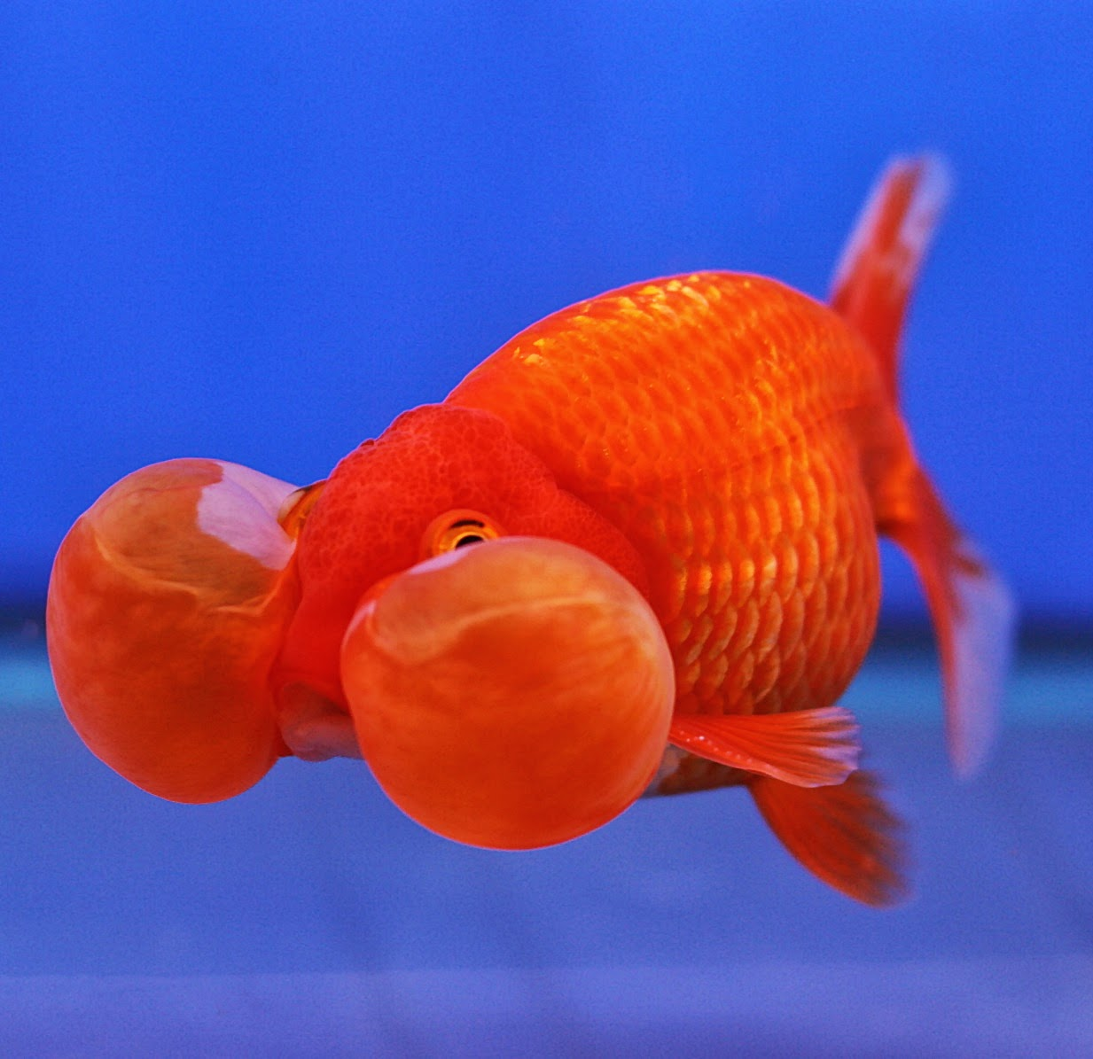 Most Unique Freshwater Fish |