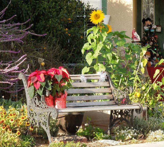 Poinsettias Are Popular in December Flower Arrangements