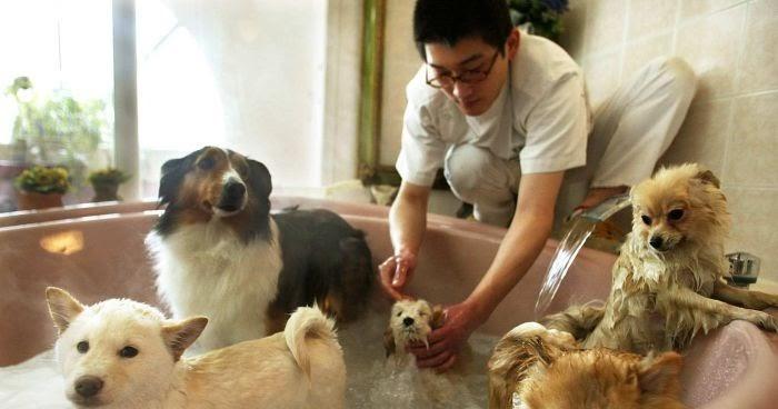 Cara Merawat Anjing Anjing Ras Mahal Kesayangan Anda Dengan Mudah Dan Cara Memanjakannya Ayo Pelajari Caranya