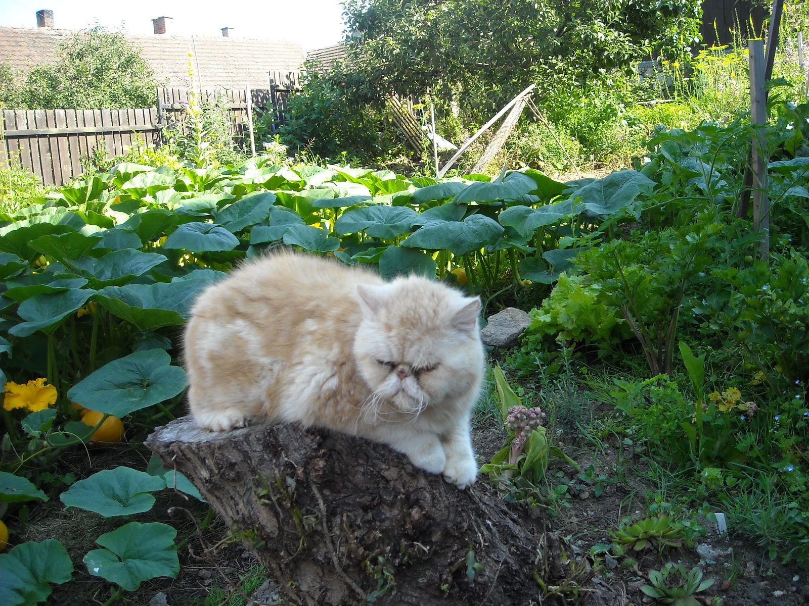 Velká kočička mohyla