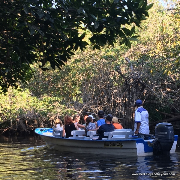 birdwatching boat ride at La Tovara Nature Reserve in San Blas, Mexico