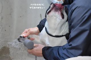 limpeza das patas do cão