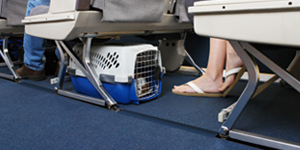 Las jaulas de viaje para tus mascotas