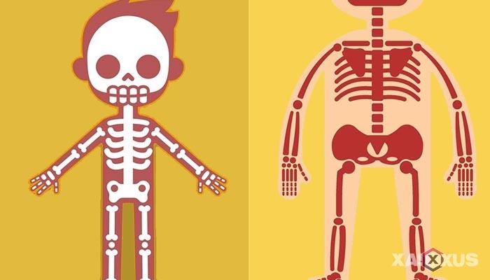 Fakta 5 - Tulang janin 33 minggu semakin mengeras
