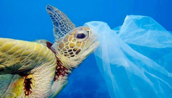 Contaminación  de los Océanos: qué es, Causas, Consecuencias y Soluciones
