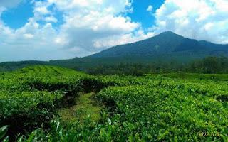 Paket wisata edukasi kebun teh murah