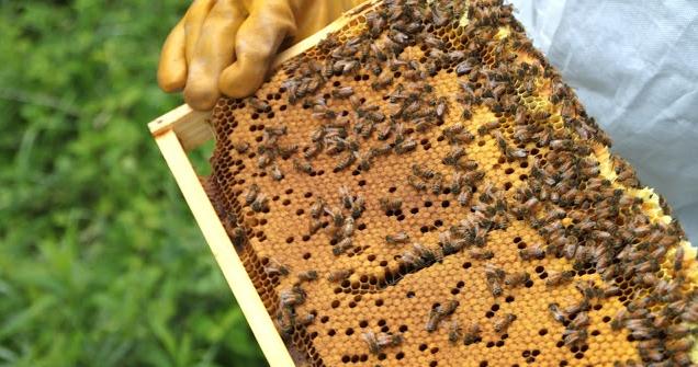 Μελισσοκομικοί Χειρισμοί Απριλίου