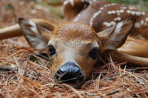 Cute Mother And Baby Wallpapers Cute Deer New Photos 2011 Funny And Cute Animals