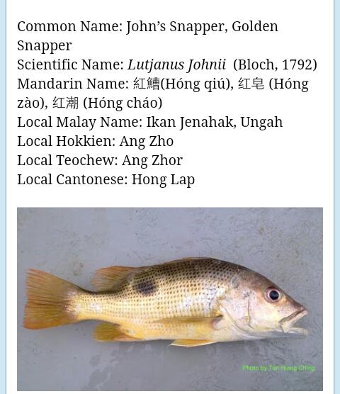 Nama Nama Ikan Laut Aneka Ikan Hias
