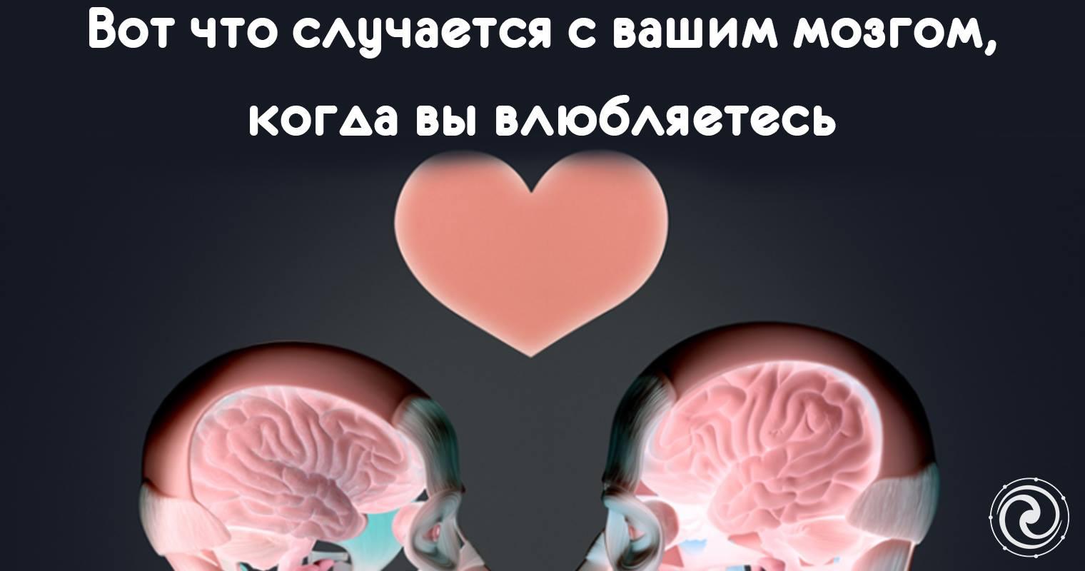mozg-i-seks-tsena-vlyublennosti