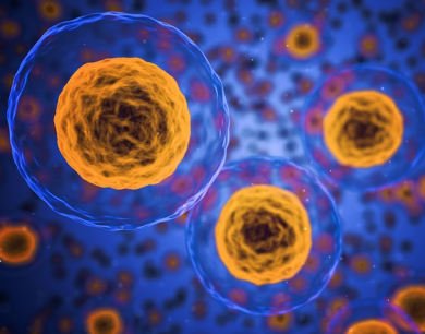Citologia | Núcleo Celular