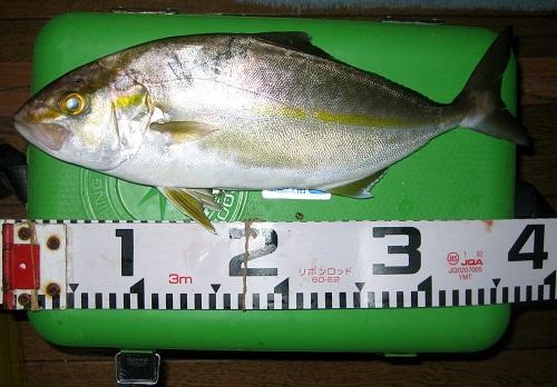 関西の船釣りで釣れる 竿とリール カンパチ