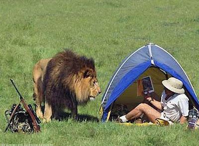 Witziger Jäger hat Pech bei der Löwenjagd lustig