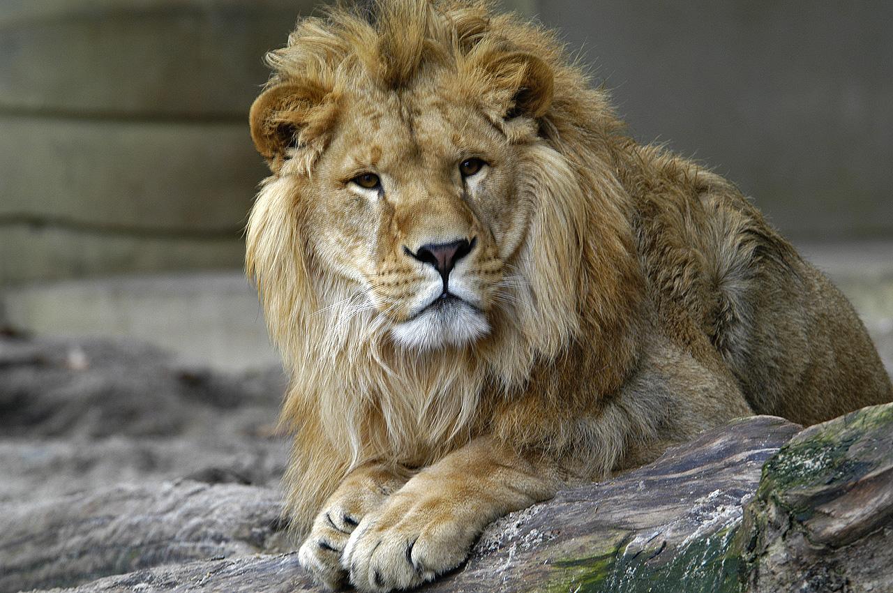 Desktop Wallpapers Kevin Richardson The Lion Man