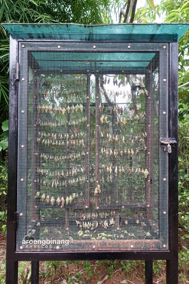 rumah kepompong butterfly park scientia square park tangerang
