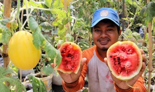 Selon, semangka berbentuk melon.