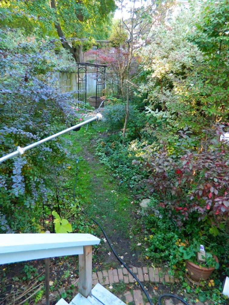 Annex garden cleanup Annex Paul Jung Toronto Gardening Services before