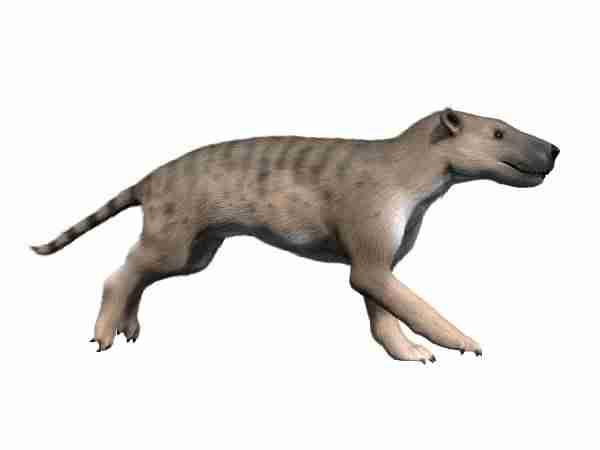 Una simulación muestra el aspecto de este hienodonte