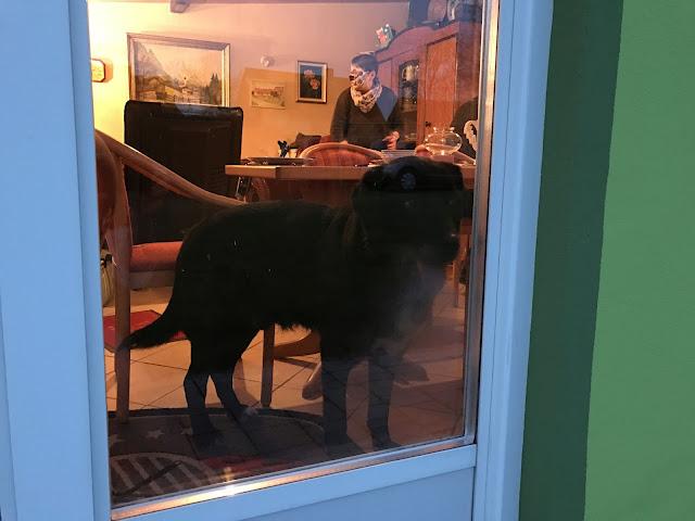 Labrador schaut aus Fenster (c) by Joachim Wenk