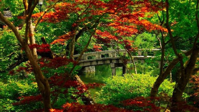 HD wallpaper met een brug door het bos.