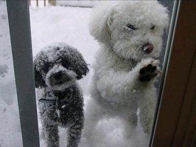 Foto divertida de perros queriendo entrar a casa