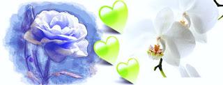Gambar bunga Untuk Cover  Facebook