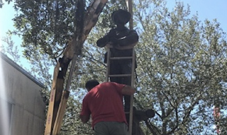 Gainesville removes Confederate statute Statue returned to local chapter of United Daughters of the Confederacy