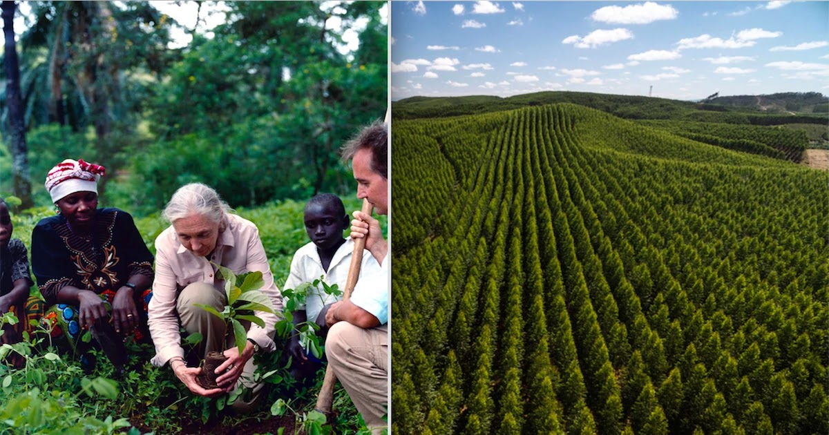 Dr Jane Goodall Plans Planting 5 Million Trees This Year