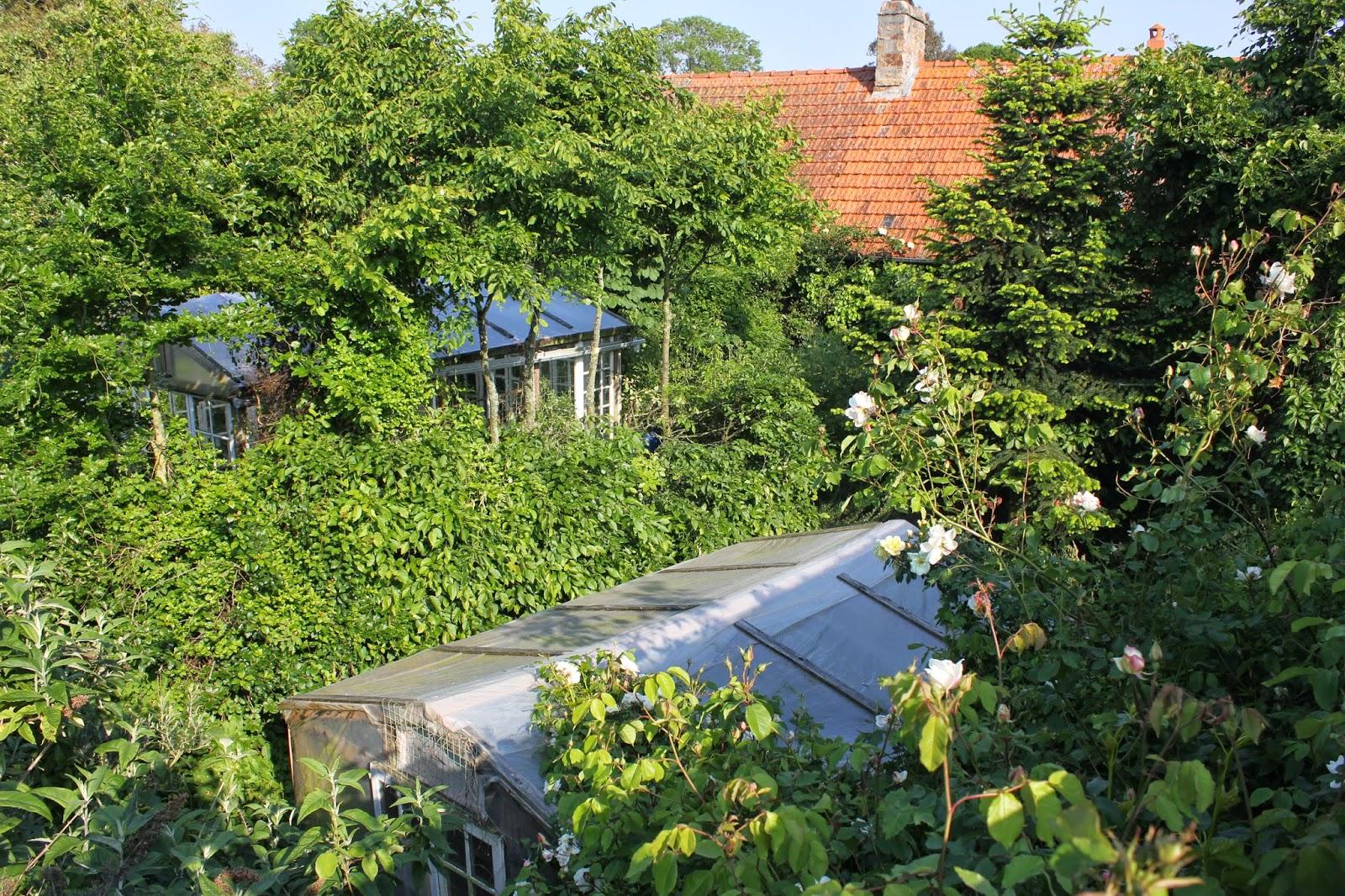 Organic forest garden