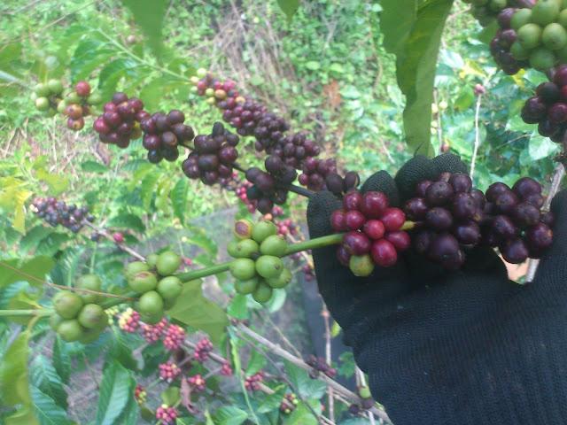 trải nghiệm midori coffee
