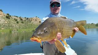Large Carp held by fisherman on Pueblo Reservoir