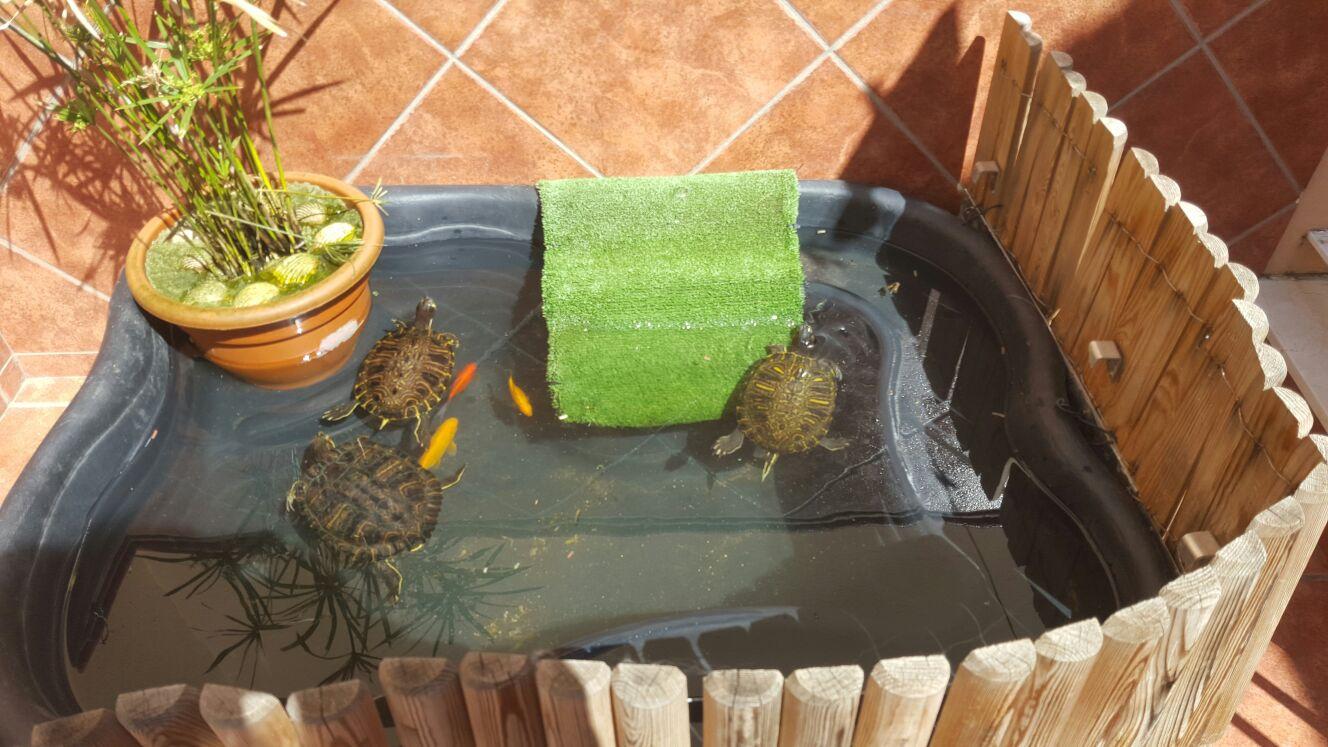 Vida tortuguera importancia de las plantas en tortugas - Estanques para tortugas de agua ...
