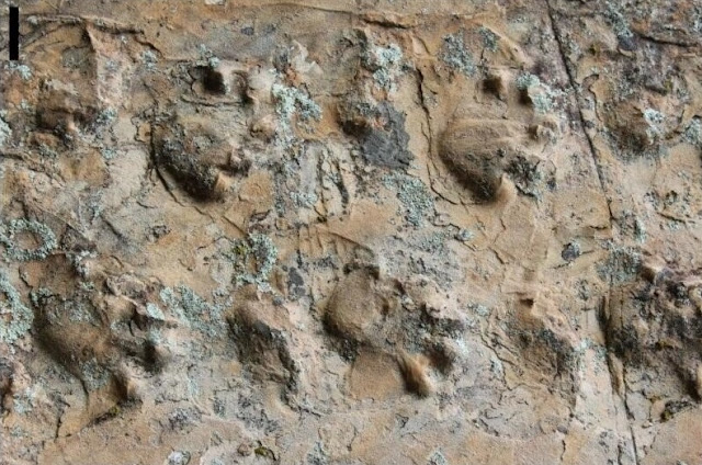 Newly discovered fossil footprints in Grand Canyon force paleontologists to rethink ancient desert inhabitants