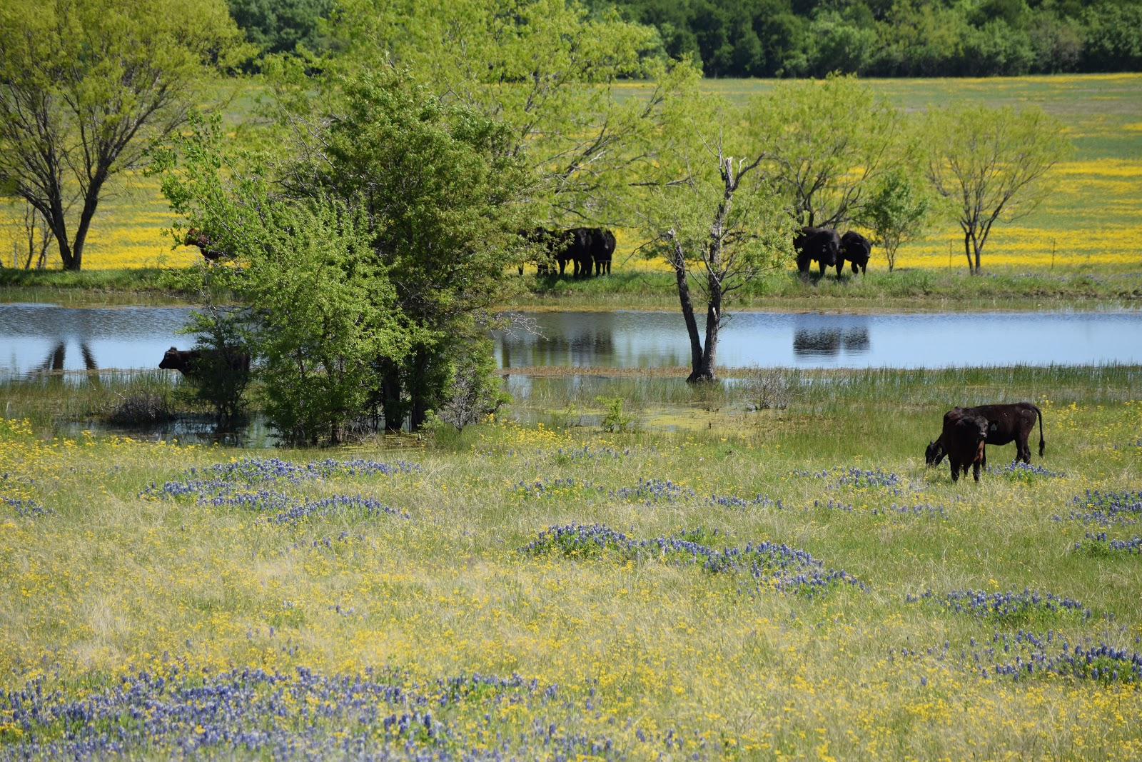Travel for a Purpose: Texas—Visiting Ennis for Bluebonnet ...