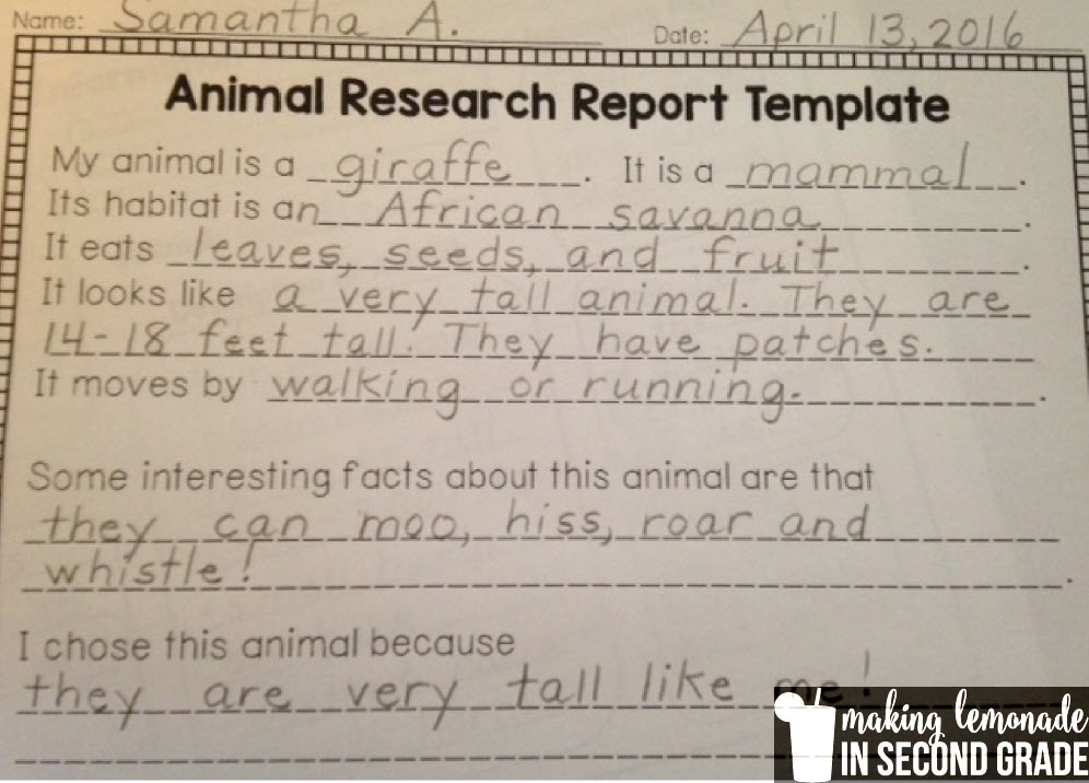 Making Lemonade in Second Grade Animal Research Projects!