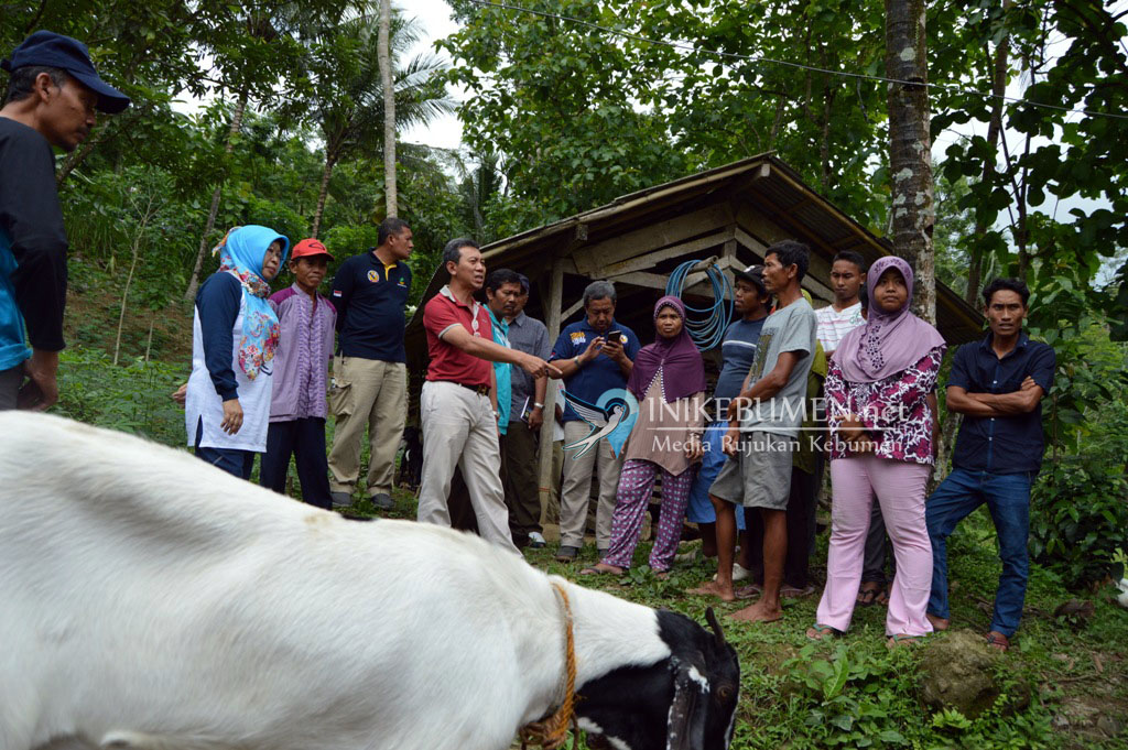 Bantuan Ternak dari Pemerintah di Kebumen Bakal Dicek Ulang