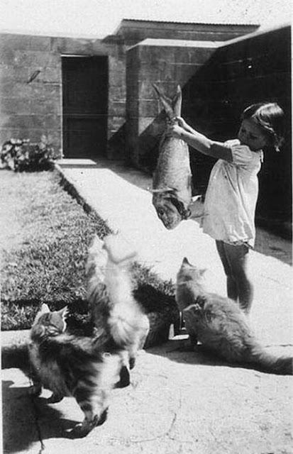 Funny Retro Kid Photographs Vintage Everyday