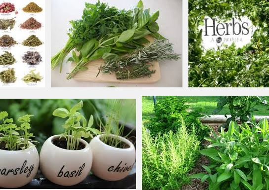 Type of Herbs