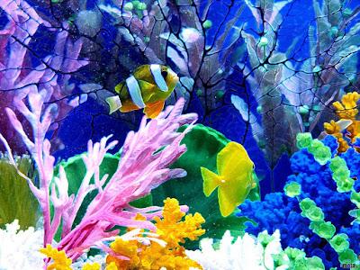 fish high definition wallpaper