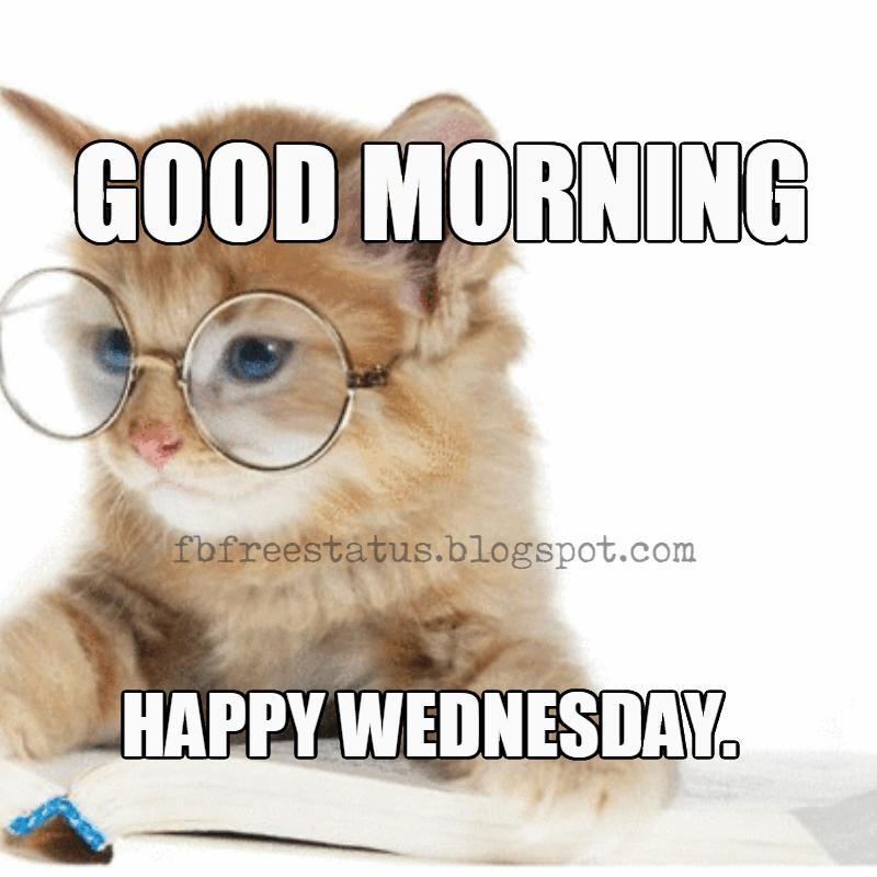 Wednesday Memes, Good morning, Happy Wednesday.