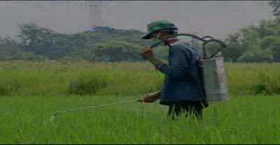 Cara mencampur pestisida yang benar
