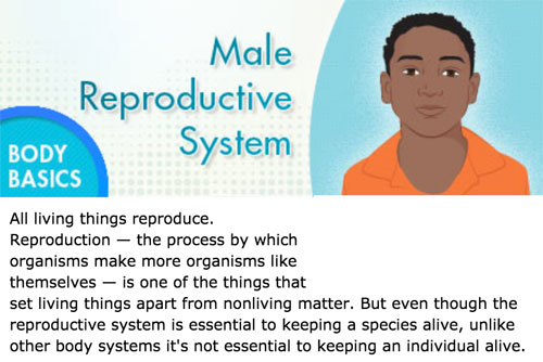 Male reproductive system basics in Kidshealth