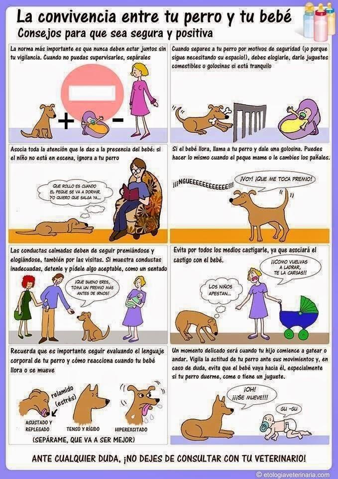 EDUCANDO A MI PERRO Tu perro y el beb 2 parte