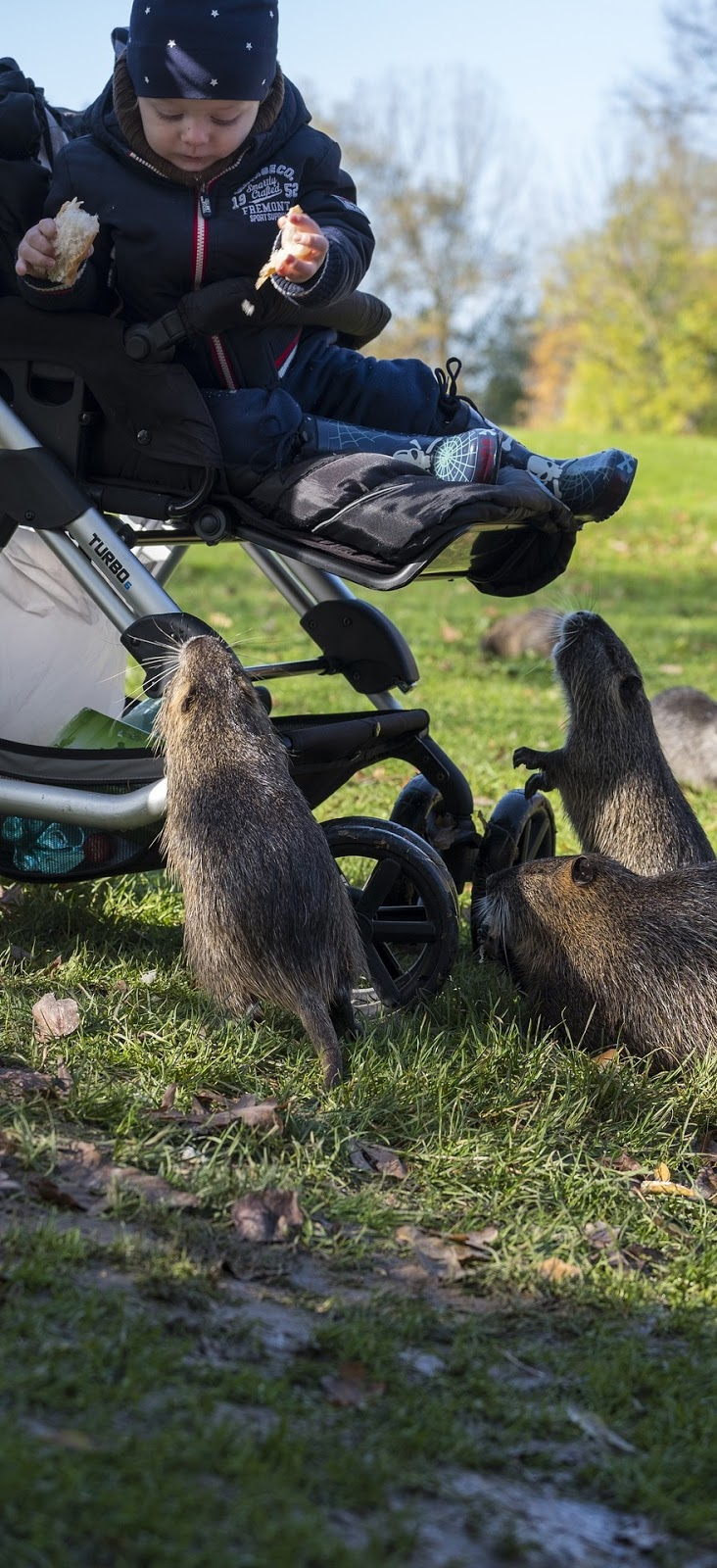 Picture of a kid feeding a group of nutria rodents.