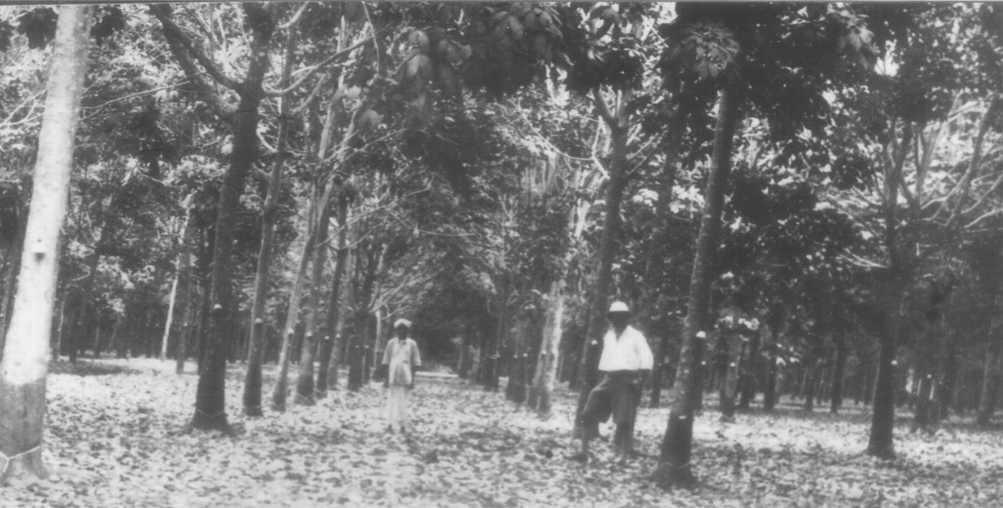 Woman724 British Planters In Malaya In The 1900 S The