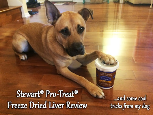 Trick AND Treat! Dog Tricks & a Dog Treat Review